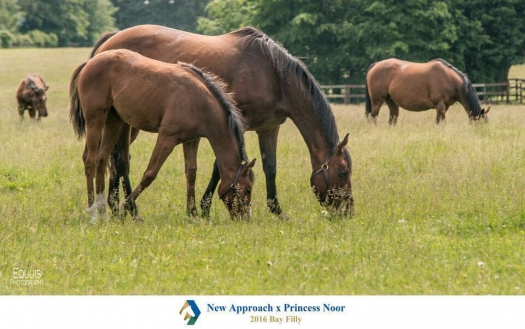 Princess Noor and her first foal, a filly by New Approach