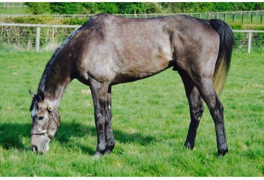 Gwafa enjoys a deserved pick of grass following his Swinton victory
