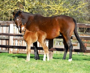 Listed winner Soon and her Dubawi filly