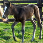 Declaration Of War x Woodland Scene pictured at a day old