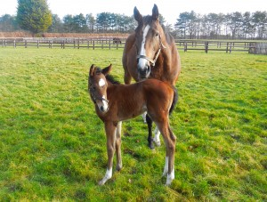 Rappel and her Invincible Spirit filly