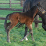 Bouyrin's Dutch Art filly