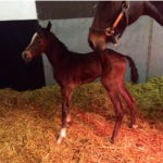 Oasis Dream filly out of Island Dreams