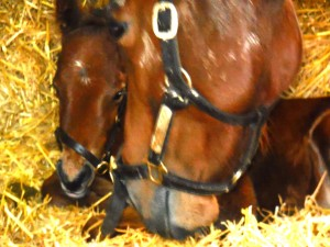 Lady Nouf and her first foal, an Oasis Dream colt