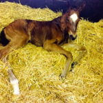 Justineo's brother at two hours old