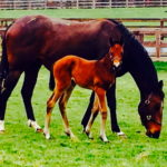 Usem and her 2015 filly by Sayif