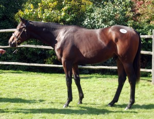 Corinthian pictured as a yearling