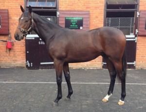 Dutch Gallery as a yearling