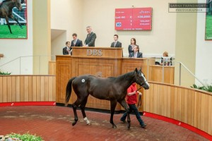 Nisser selling at DBS last year. Pic courtesy of DBS/Sarah Farnsworth