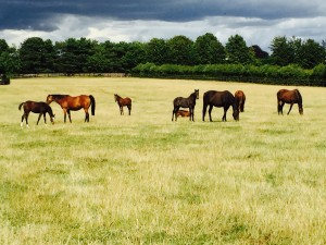BDS mares and foals