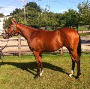 Sister to Galileo Gold purchased at DBS