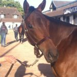 €100,000 Kendargent filly