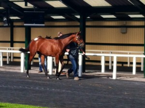 The next Princess Noor? Holy Roman Emperor x Another Storm filly
