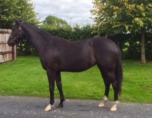 Lot 260: Sayif x Lough Mewin