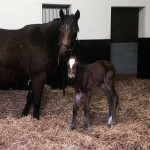 Queen Sarra and her Declaration Of War filly
