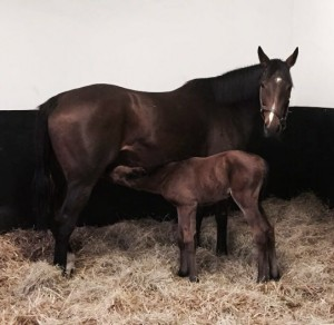Soon and her Dubawi filly