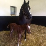 Epiphany stands proud over her Exceed And Excel filly