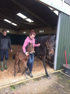 Henrythenavigator x Bouyrin filly