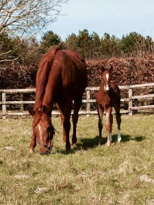 Maid To Master and her Lope De Vega colt enjoying the sun
