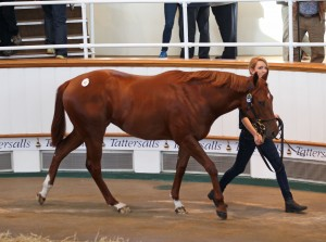 Raven's Pass - Artisti filly bought at Tattersalls