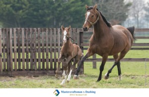 Dashing and her Mastercraftsman colt
