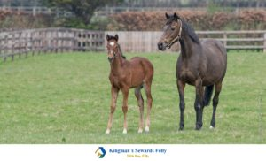 Sewards Folly and her filly foal by Kingman