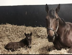 Princess Noor poses with her Australia colt