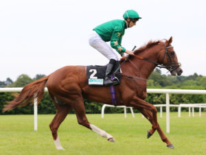 Decorated Knight could be set for a trip to Dubai after making a winning return at Lingfield